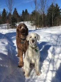 pets-treated-by-gatineau-vet_IMG_0198