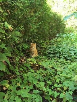 pets-treated-by-gatineau-vet_IMG_0938