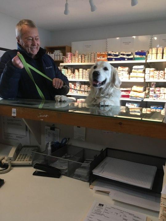 pets-treated-by-gatineau-vet_IMG_1130