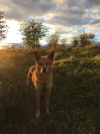 pets-treated-by-gatineau-vet_IMG_1153