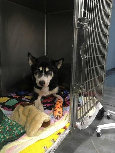 pets-treated-by-gatineau-vet_IMG_1431